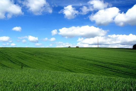 coline bretonne