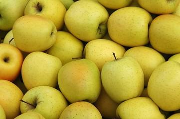 pommes goldens