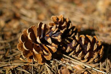 autumn naturemort
