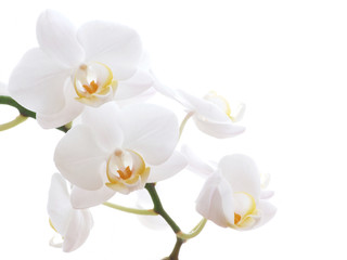 Door stickers Orchid white orchid
