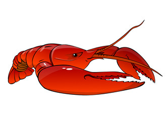 boiled  red lobster on a white background