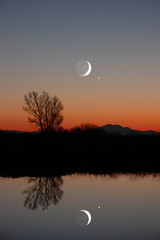 winter moon and lone tree