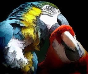 tender parrot