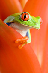 Photo sur Aluminium Grenouille frog in a plant