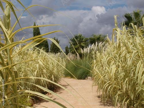 Gräsergarten Bilder gräsergarten stockfotos und lizenzfreie bilder auf fotolia com