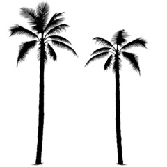 palm tree silhouette 1