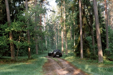 forest and car