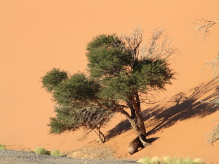 wüsten vegetation