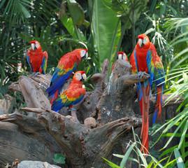 flock parrot macaw