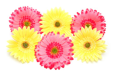 various colorful flowers isolated on the white