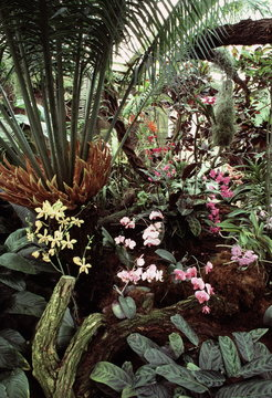 plants in tropical greenhouse