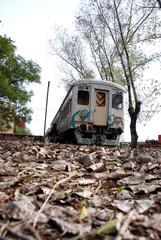 tren y hojas