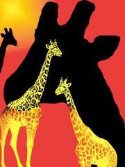 perfil de girafas