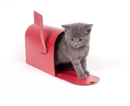 mail order kitten