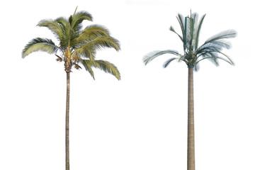 vrai et faux palmiers