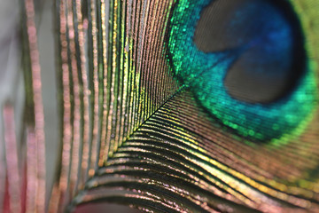 the abstract of peacock feathers
