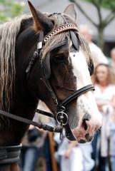 cheval attelé