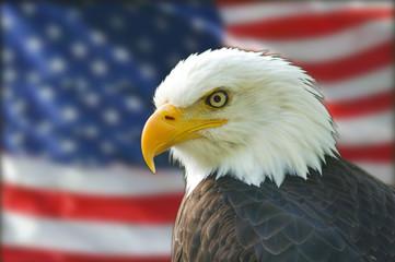 Foto auf AluDibond Adler american bald eagle flag