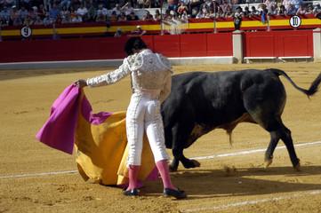 torero-55