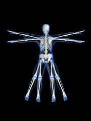 skelett im da vinci style