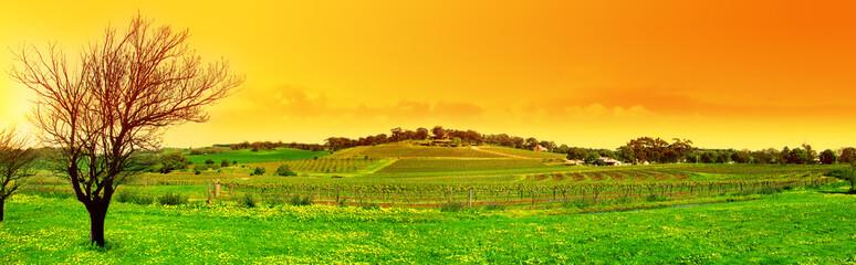 Fototapete - fresh vineyard panoramic