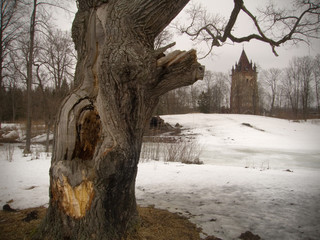 gothic tower and old tree
