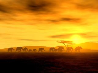 Die Wanderung der Elefanten