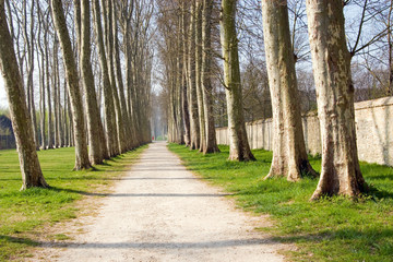 Footpath in the garden at the Palace of Versailles