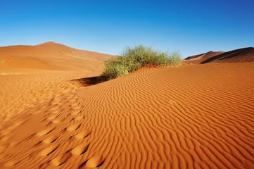 Namib Desert. Sossusvlei, Namibia.