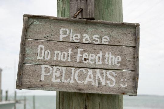 Please Do Not Feed the Pelicans Sign