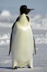 Standing penguins