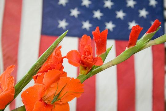 Grasshopper, Flower and American Flag