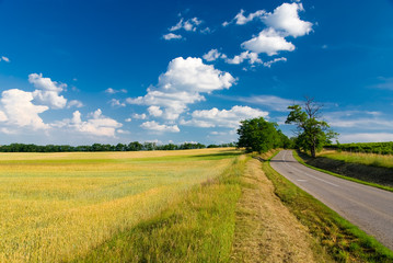 Landscape - road, field, trees and blue cloudy sky