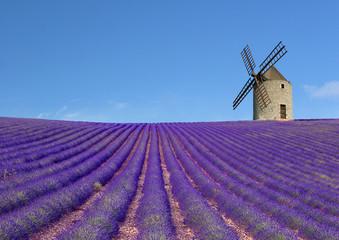 Türaufkleber Lavendel Moulin et champs de lavande