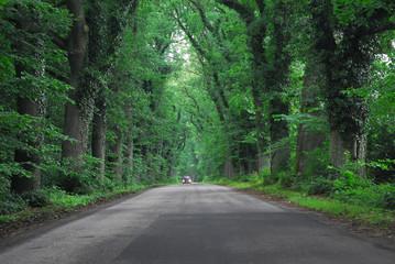 Landstraße im Wald
