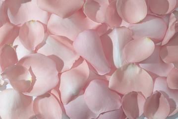 rose leaves background