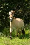 pony dun haar
