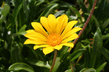 yellow flower with beautiful petal
