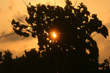 ray sun entrenching through tree