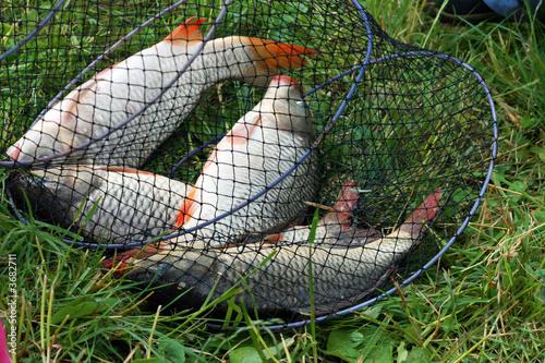рыболовная сеть появилась