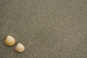 Acrylic Prints Stones in Sand Two seashells on a grey sandy beach..