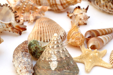Collection of Mollusk isolated in