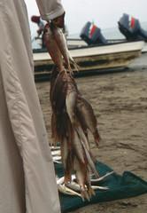 Frischer Fisch auf Schnur