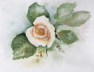 rose water-colour 3