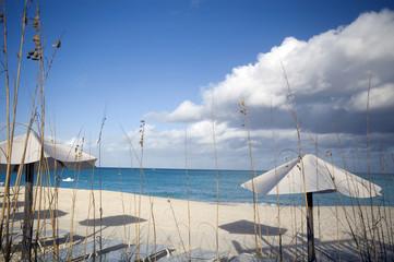 beautiful beach in the tropics bahamas