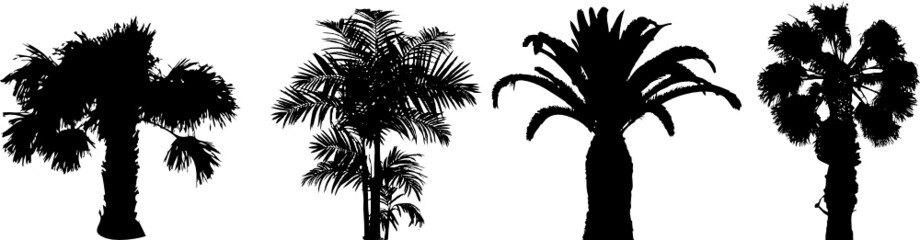 Few silhouette of palm trees in a row