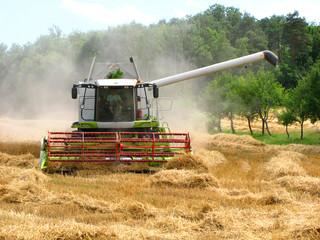 grüner Mähdrescher erntet ein Getreidefeld ab mit Wald