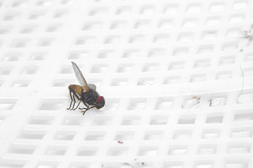 A dead house fly on a fly swatter.