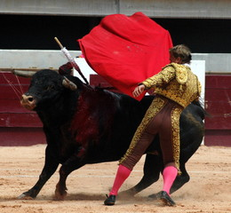 Self adhesive Wall Murals Bullfighting corridas