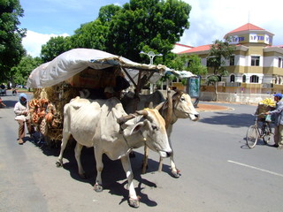 Char a boeufs, Phnom Penh